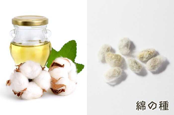 綿実油、カロリー、利点と害、有用な特性