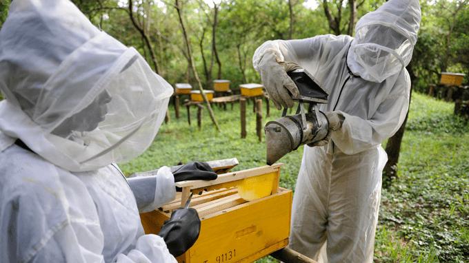 養蜂を成功させるために不可欠な養蜂設備