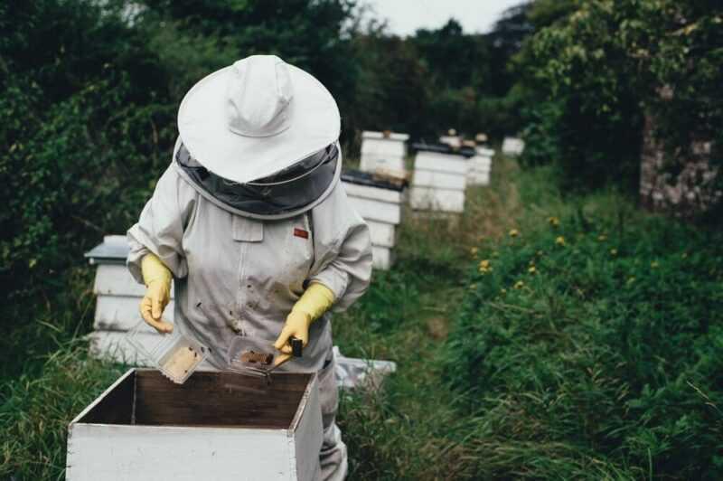 養蜂事業:開始方法、詳細分析