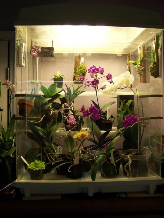 蘭の「マルチレベル」モデルでは、屋内の蘭のいずれかを育てることができます-居住区で最も希少で非常に典型的ですが、気まぐれです