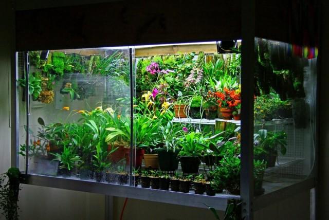 毎年、蘭のすべての要素は、カビ、バクテリア、および特殊な殺菌剤の溶液による汚染に対して処理されます