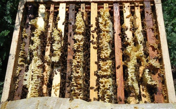꿀벌이 벌집에서 날아 가지 않는 이유는 무엇입니까?