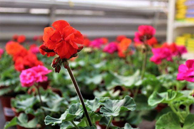 집 꾸미기-종자 관리에서 실내 식물
