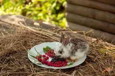 Witaminy dla królików: co i dlaczego