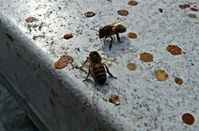 Wiosna w pasiece – porady doświadczonych pszczelarzy