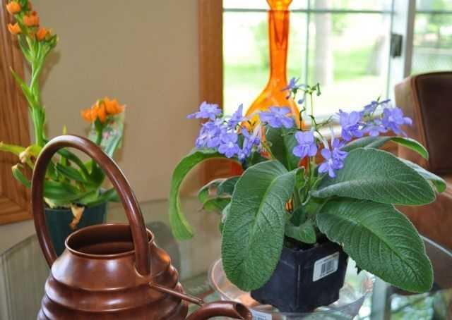 Kwiaty przez cały rok – pielęgnacja