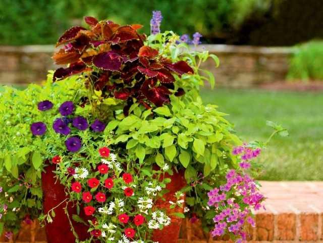 Najlepsze rośliny domowe do pielęgnacji aranżacji ogrodu w pojemnikach