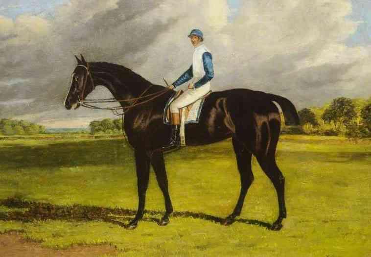 Variedade de cavalos puro-sangue inglês