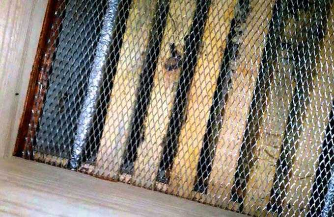 A importância de ventilar as colmeias