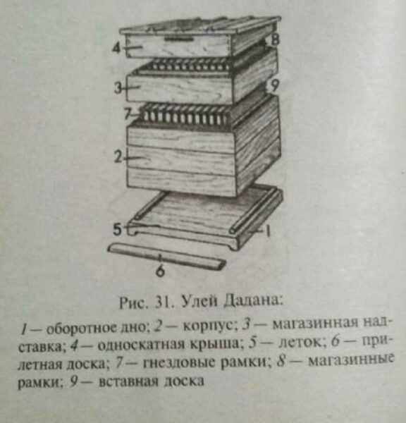 Colmeia Dadanovsky – características, vantagens, fabricação