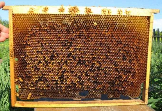 Sobre ração protéica para abelhas