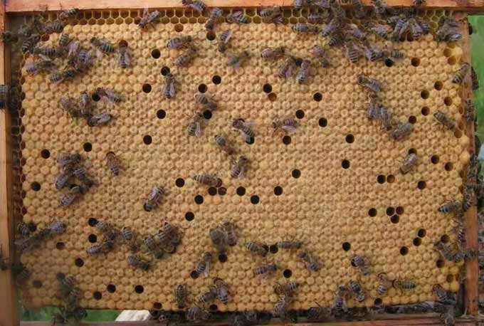 Tudo sobre o alargamento do apiário de primavera