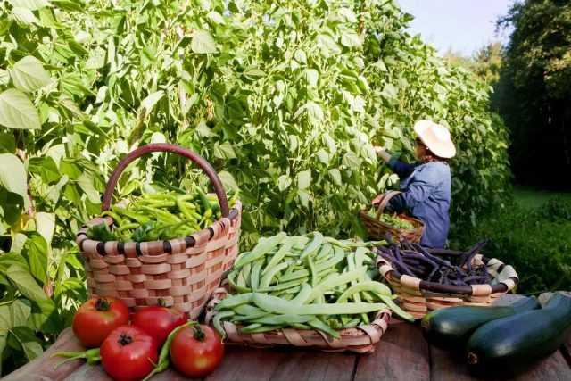 Calendário lunar do jardineiro e jardineiro para agosto de 2020-Care