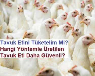 Tavuklar neden nedenleri ve çözüm yöntemlerini süpürmez