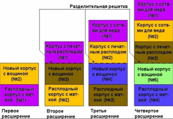 genişleme şeması