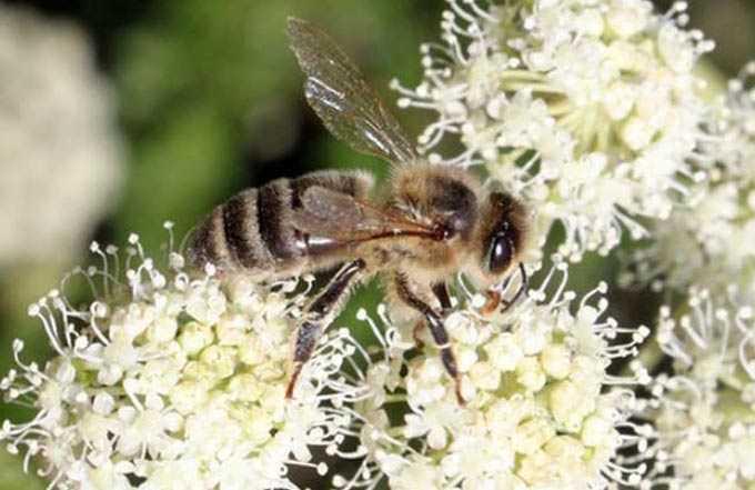 nektar koleksiyonu