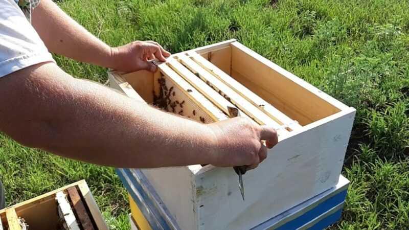 Arı paketleri - nedir, nasıl oluşur ve içerilir