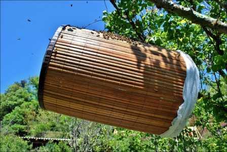 arı kapanı
