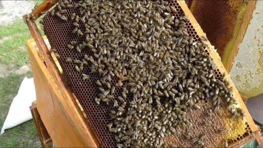 Arıların bahar denetimi yapıyoruz