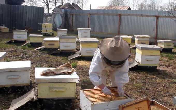 Bir ev arı kovanı sıfırdan nasıl düzgün bir şekilde organize edilir