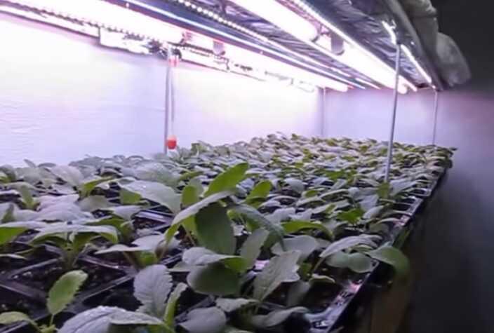 Evde hidroponik olarak turp nasıl yetiştirilir
