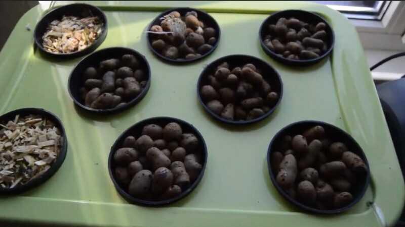 Hidroponik bir bitkide tohum ekmenin ve büyütmenin temelleri
