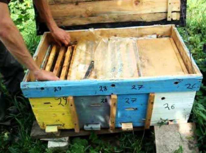Şezlonglarda arı tutmanın özellikleri
