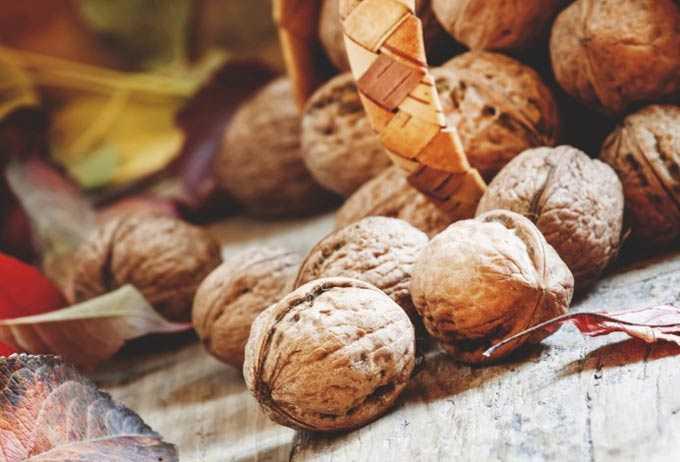 Tiroid bezi tedavisi için karabuğday, fındık ve bal
