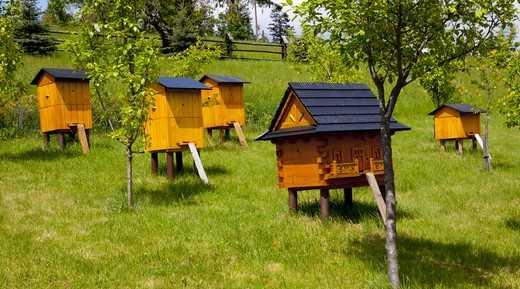 Bir arı kovanının yeri farklı olabilir: bir şehirde veya uzak bir bölgede.