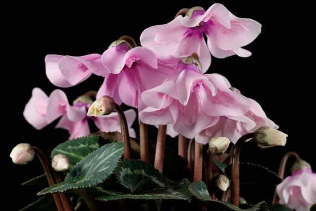 6 en iyi katmanlı bitki