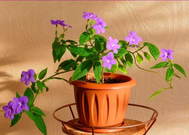 Basit çiçeklerle en iyi iç mekan bitkileri