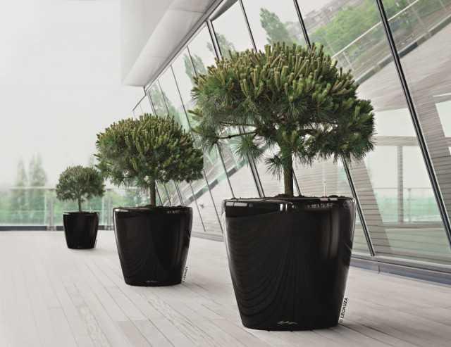 Bir ağaç evde nasıl geçinilir - Güzel iç mekan bitkileri