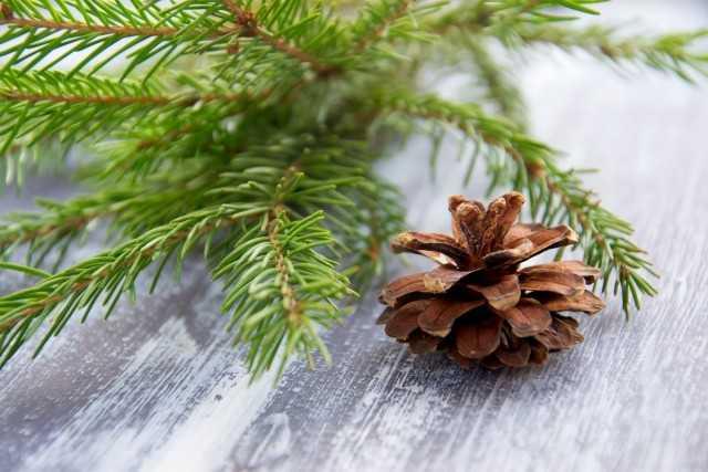 Bir tencerede bir ağaç bakımı nasıl yapılır? – Güzel iç mekan bitkileri