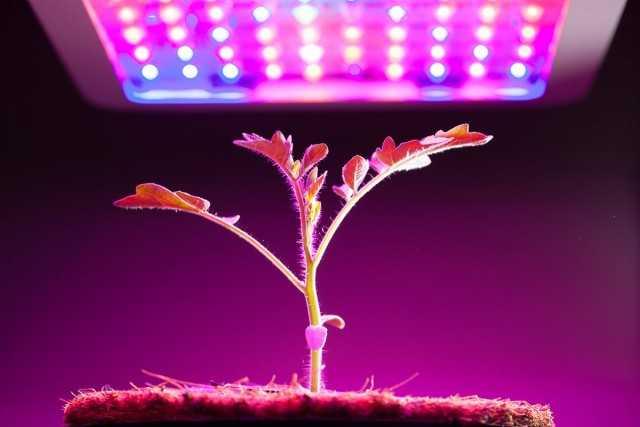 Doğru fitolamp - bitkilerin ek aydınlatması için bir aydınlatma cihazının seçilmesi - Güzel iç mekan bitkileri