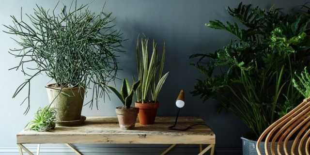 En iyi ajur iç mekan bitkileri