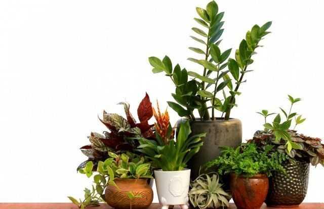 En katı iç mekan bitkilerinden 5 tanesi