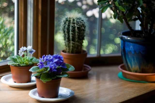 Ev bitkisi bakımı - bakım