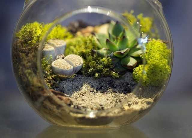 Florarium için bitki seçimi