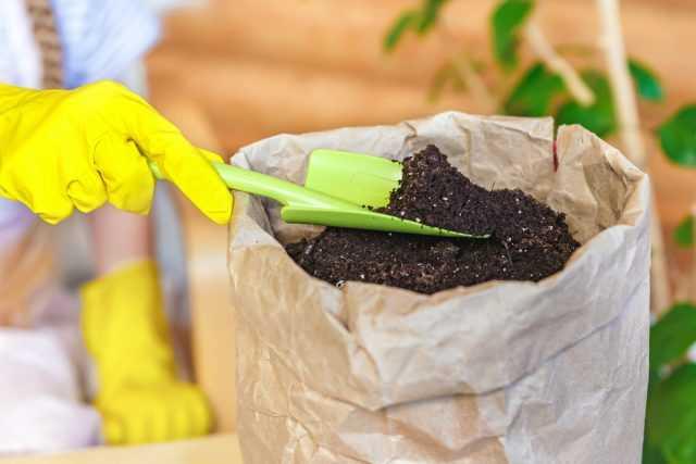 İç mekan bitkileri için substrat nedir ve nelerden oluşur? bakım