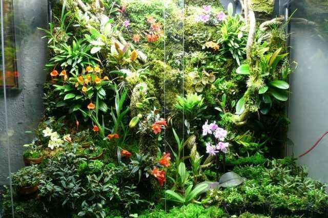 """Orchidarium - orkideler için rahat bir """"ev"""" - Güzel iç mekan bitkileri"""