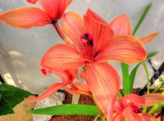 Orkide hastalıkları ve zararlıları. Onlarla başa çıkmanın yolları - ayrılmak