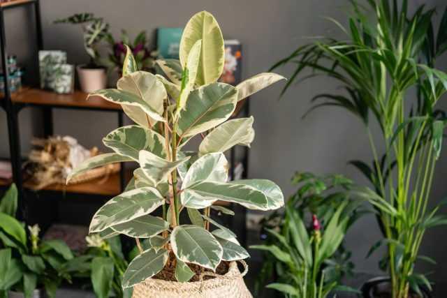 Pahalı iç mekan bitkileri satın alırken hatalardan nasıl kaçınılır?
