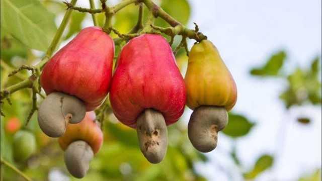 Yediğimiz ama nasıl büyüdüğünü bilmediğimiz 15 meyve