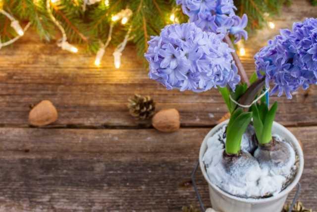 Yeni Yıl için iç dekorasyon için basit fikirler - Güzel iç mekan bitkileri
