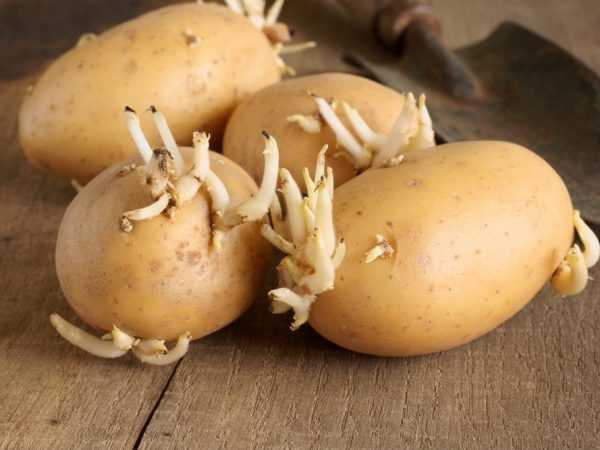 Семена можно защитить от грибковой инфекции