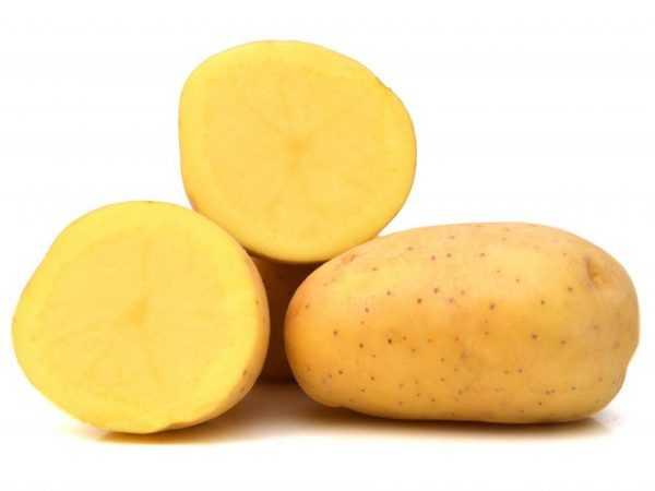 Описание картофеля Триумф